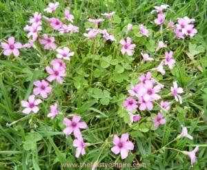 Splendour in the Grass Small